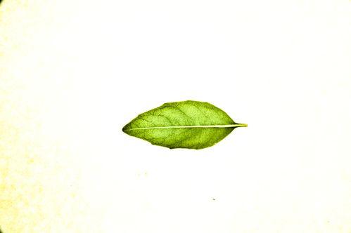 herbier 0817