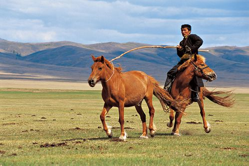sous-les-yourtes-de-mongolie-04.jpg