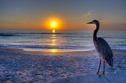 animal-divers-rivage-coucher-soleil.jpg