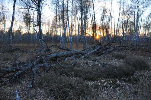 2010 10 22 Site N°D Red Forest Tchernobyl JM Bonzom 058 (1