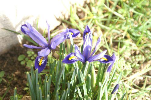 printemps-27-02-10--1-.JPG