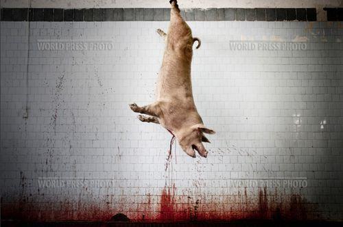 tommaso ausili slaughterhouse03