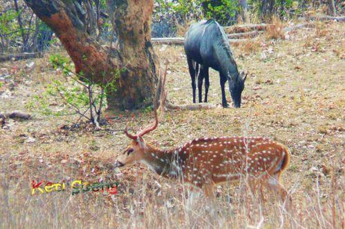 Madha Pradesh, Maharastra, Goa44