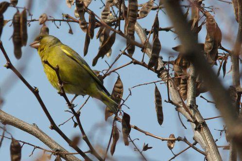 oiseaux1179