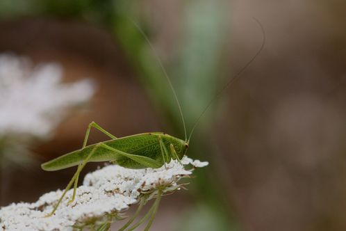 insectes2640