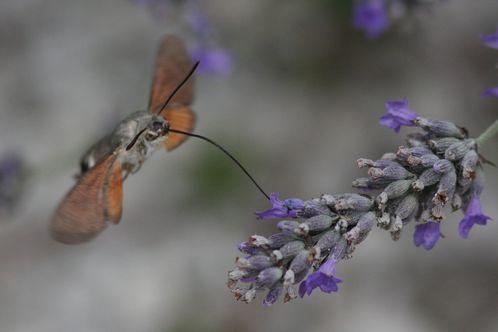papillons2577