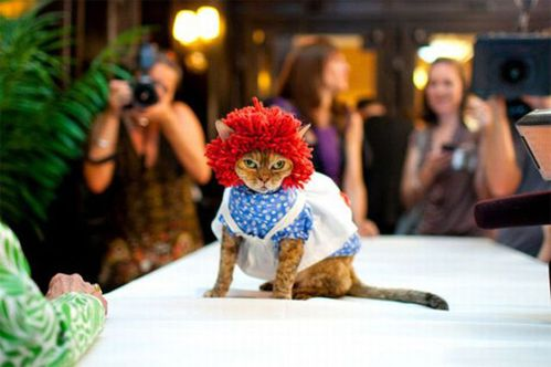 cat-funny-red-hat