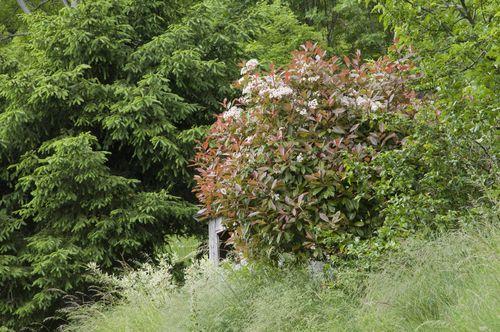 arbustes 1516