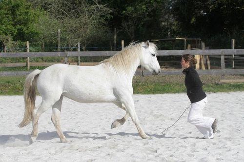 ER - chevaux -19.04.2014 5136