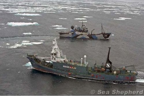 operation-Tolerance-Zero-Sea-Shepherd.JPG