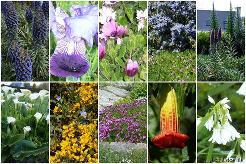 fleurs-brehat2012.jpg