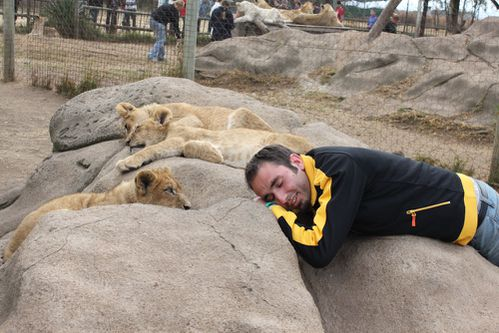 Lion-Park 2520
