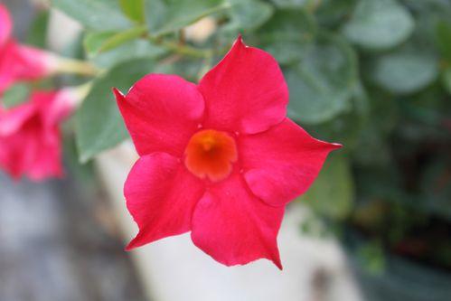 fleurs-2219.JPG