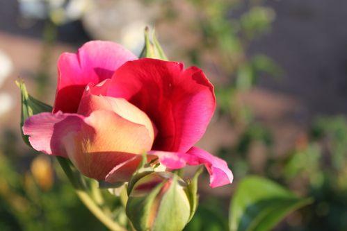 Fleurs 4802