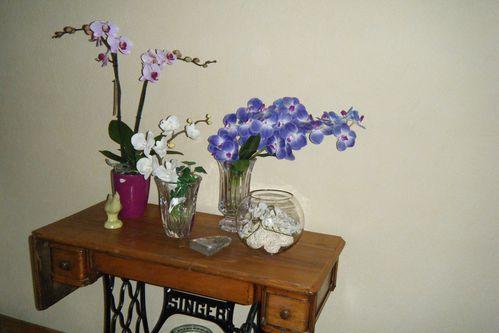 03/10 orchidées séjour