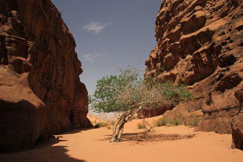 jordanie-Scrambling 0264-copie-1