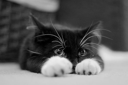 chaton-trop-mimi.jpg