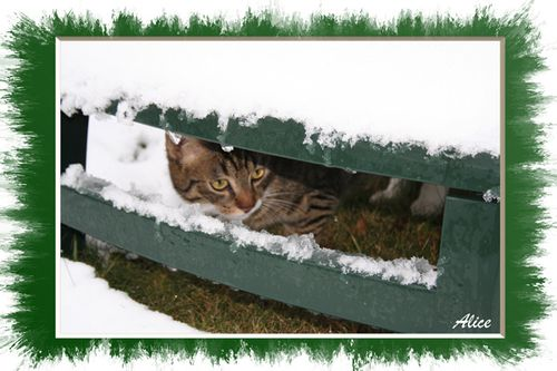25-Chat-neige
