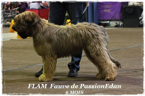 FLAM Luxembourg 6 mois