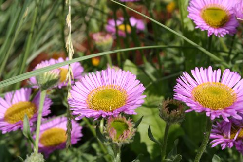 Fleurs 1395
