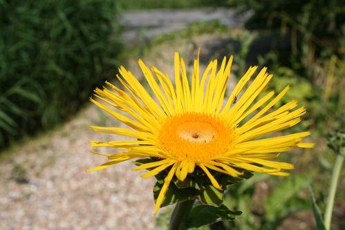 Fleurs 1417