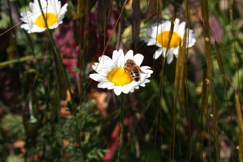 Fleurs 3173