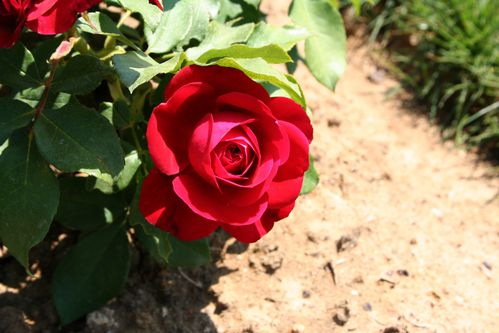 Fleurs 3194