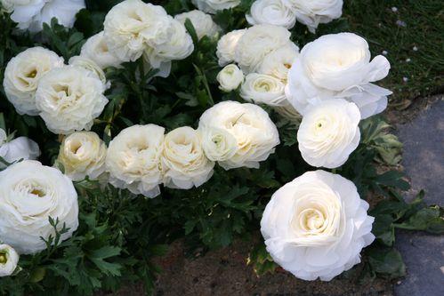 Fleurs 4652