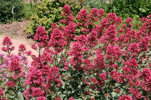 Fleurs 5000