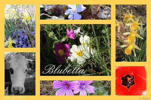 photos printemps-blubella-copie-1