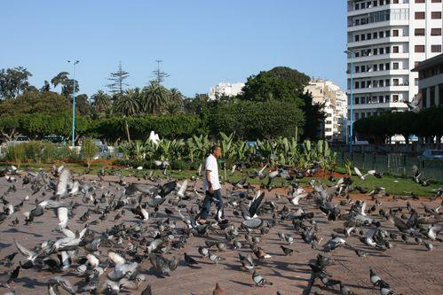 J4 Casa place M5 pigeons1