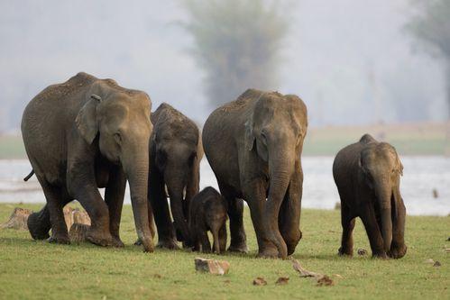 elephant-d-asie