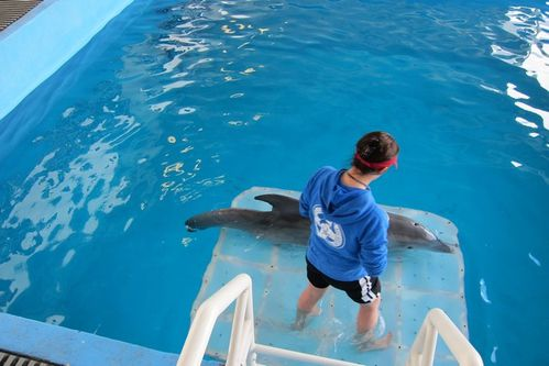 Dolphin tale (7)