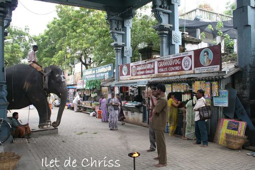 ELEPHANT TEMPLE PONDICHERI 23 IDC