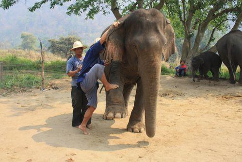 Thailande 5595