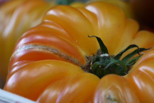 Tomates-colorees--14-.JPG