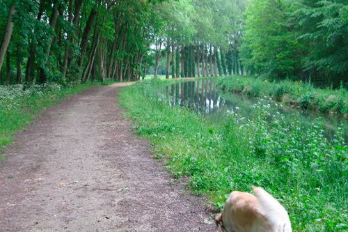 truffe-et-canal