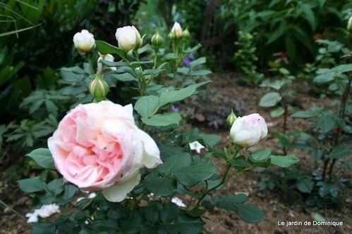 Roses-2010 2248