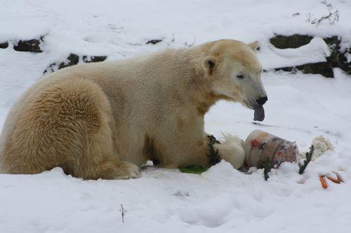 Knut-Erinnerung-19.10.2012 3478