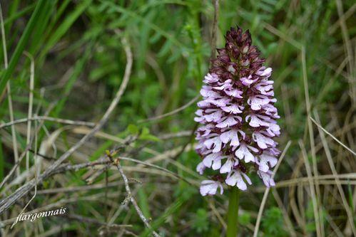 orchidées 3 2013