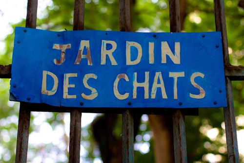 jardin-des-chats