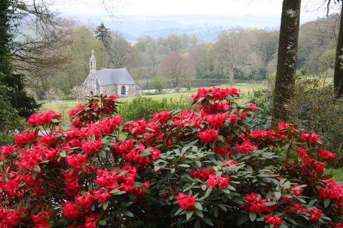 Les Rhododendrons, Feu D'Artifices Printanier - Les Conseils De