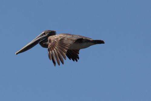 oiseaux CUBA 3400