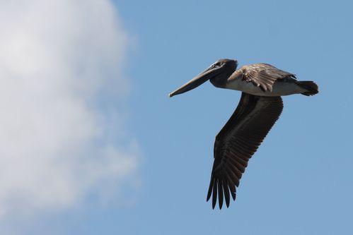 oiseaux CUBA 3401