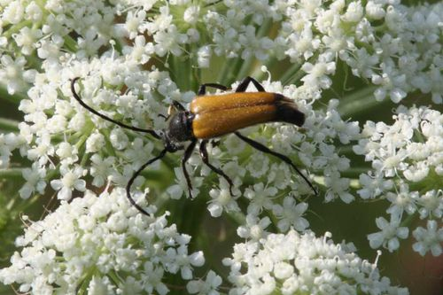 insectes2408 1