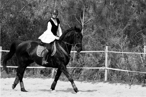 cheval-36nb.jpg