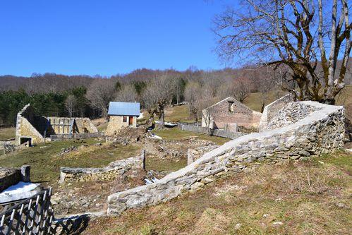 goulandiere-mars-2011 0071
