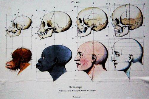 792c3-Tableau-de-l-evolution--vue-raciste-du-19e-s.-