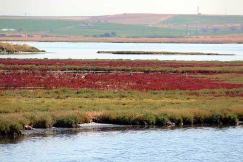845f5 Salicornes sur le lac Vistonidas