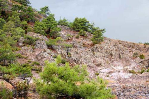 852a2 Forêt de Dadia (Thrace, Grèce)